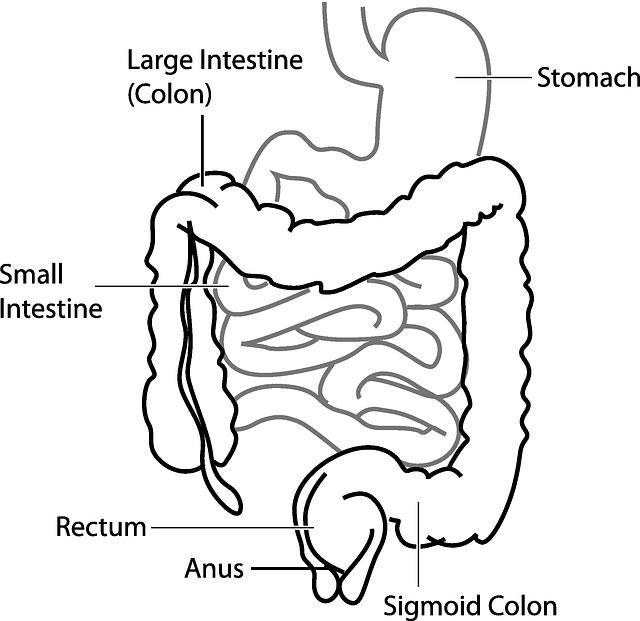 trávicí systém